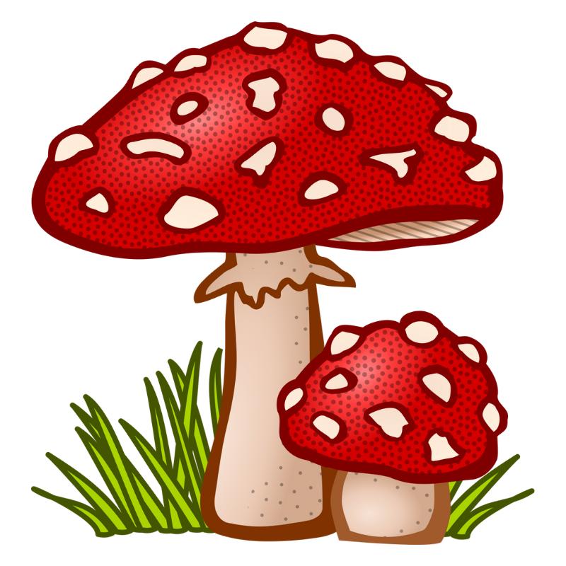 Champignons rouges à pois blancs