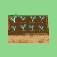 Bac de potager avec plantation
