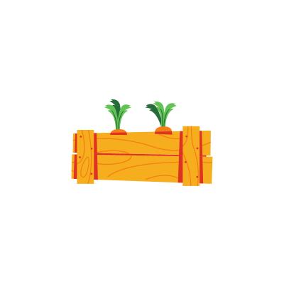 Plant de carottes